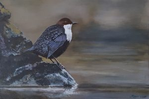 A small realistic oil painting on wood of a dipper, a rare bird in the Netherlands.